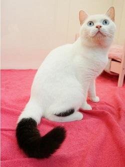 ブランケットキャッツ 猫 たまお.jpg